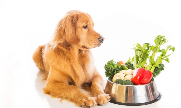 Pet Alert: The Naked Diet for your dog!